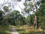 Mount Martha / Mount Martha Park / Walking track between car park and summit of Mt Martha