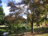 Myrtleford / Jubilee Park, Myrtle Street / View west along Happy Valley Creek through park