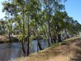 Natimuk / Wimmera River on northern side of Wimmera Highway, east of Natimuk / View north along river, north of old railway bridge