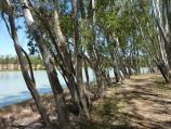 Nhill / Northern side of Lake Nhill at boat ramp off Campbell Street / Walkway along western side of lake