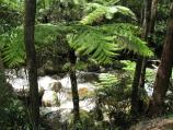 Noojee / Toorongo Falls Reserve / View of Toorongo River from walking track