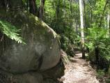 Noojee / Toorongo Falls Reserve / Walking track to Toorongo Falls
