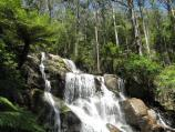 Noojee / Toorongo Falls Reserve / View of top of Toorongo Falls