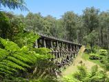 Noojee / Trestle Bridge, Mount Baw Baw Road / View along bottom of trestle bridge