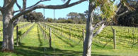 Ponda Estate Vineyard, Wallington