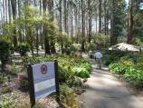 Olinda / National Rhododendron Gardens / Walking path to gardens entrance