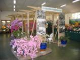 Olinda / National Rhododendron Gardens / Flower show in display hall