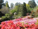 Olinda / National Rhododendron Gardens / View down to pond