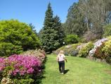 Olinda / National Rhododendron Gardens / Lawns above pond