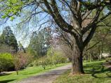 Olinda / National Rhododendron Gardens / Pathway near Cherry Lawn