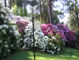 Olinda / National Rhododendron Gardens / Path between Pond and Lake