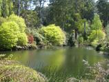 Olinda / National Rhododendron Gardens / View across lake