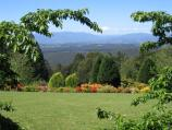 Olinda / National Rhododendron Gardens / View at Cherry Tree Grove