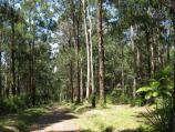 Olinda / Valley Picnic Ground, Boundary Road / View north-east along Georges Track near car park