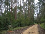 Orbost / Murrungower Forest Drive / Blue Gum plantation, Tarlton Track