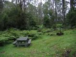Orbost / Murrungower Forest Drive / Picnic area along walking track between Tarlton Track and Little Cabbage Tree Creek Falls