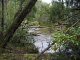 Orbost / Murrungower Forest Drive / View of Little Cabbage Tree Creek between picnic area and falls