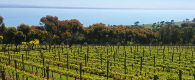 Jack Rabbit Vineyard, Bellarine