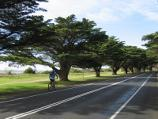 Queenscliff / Bellarine Highway / View east along the Cypress tree-lined Bellarine Hwy, approaching King St