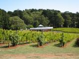 Red Hill / Vines of Red Hill, Red Hill Road / Vineyard