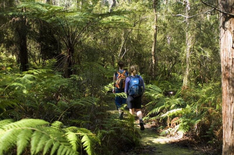 Croajingolong National Park - Walking track through fern gully