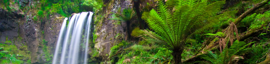 Great Otway National Park photos