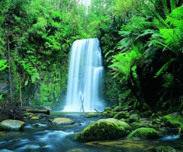 Great Sandy National Park >> Great Otway National Park photos - Travel Victoria: accommodation & visitor guide