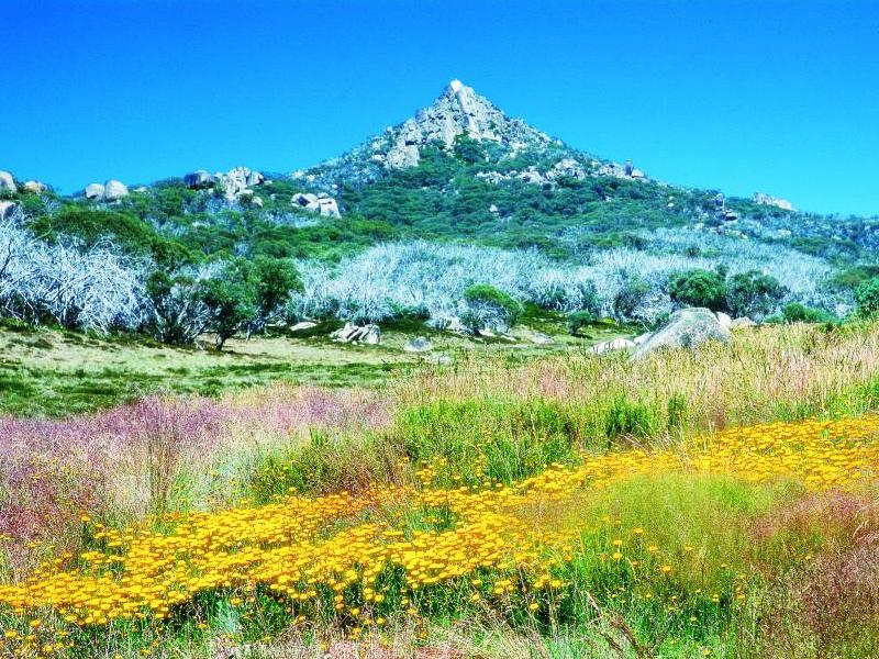 Alpine Region - Mount Buffalo, wildflowers and The Horn in the background