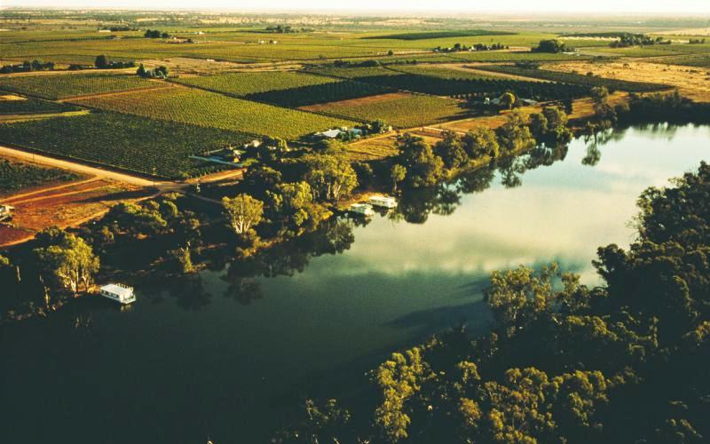 Murray River - Farms along Murray River near Mildura