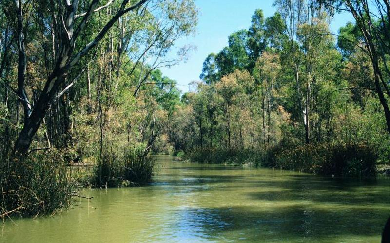 Murray River - Murray River through Barmah State Forest