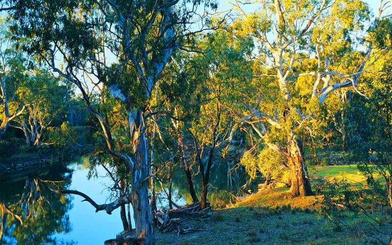 Murray River - Murray River near Rutherglen