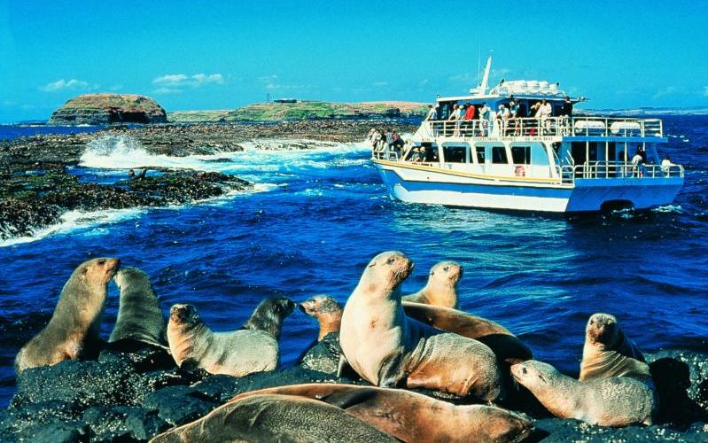 Phillip Island highlights - Seal watching cruise at Seal Rocks
