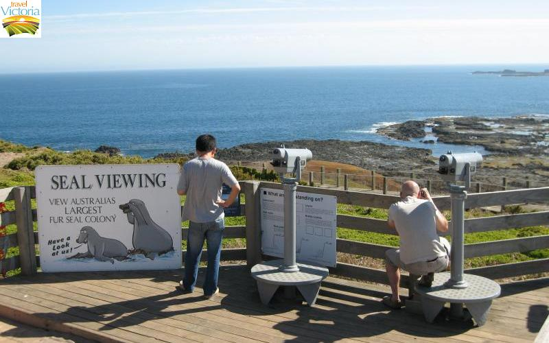 The Nobbies - Seal viewing platform at The Nobbies Centre