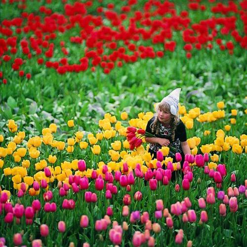 The Dandenongs - Tesselaar's Tulip Farm, Silvan