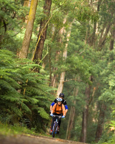 The Dandenongs - Bike riding through the Dandenong Ranges National Park