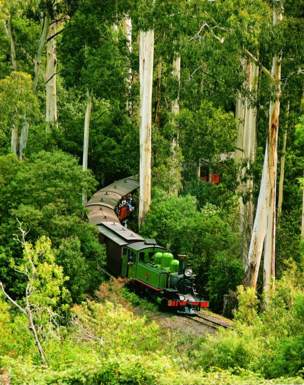 The Dandenongs - Puffing Billy railway through the forest