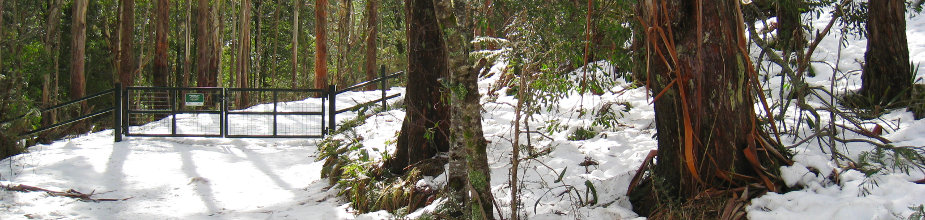 Mount Donna Buang snow photos