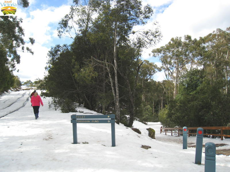 Mount Donna Buang snow - Path to toboggan runs and summit
