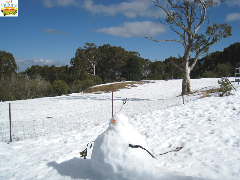 Mount Donna Buang snow - Snow man at summit