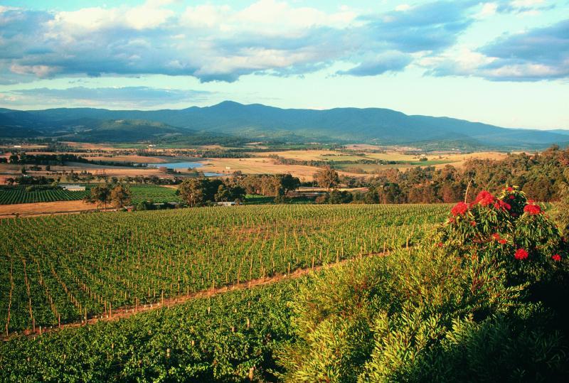 Yarra Valley - Vineyards