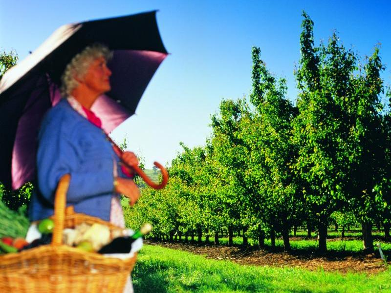 Yarra Valley - Local orchard