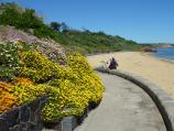 Sandringham / Beach and foreshore park between Sims Street and band rotunda / South-easterly view along beach pathway