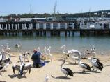 San Remo / Foreshore along Marine Parade / Feeding of the pelicans on beach near jetty