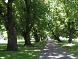 South Yarra / Fawkner Park / Shady path