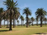 St Kilda / Catani Gardens, Beaconsfield Parade / Palm trees in gardens
