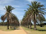 St Kilda / Catani Gardens, Beaconsfield Parade / View south-east through gardens at northern end