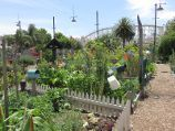 St Kilda / Veg Out Community Gardens, Shakespeare Grove / View through gardens towards Luna Park