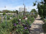 St Kilda / Veg Out Community Gardens, Shakespeare Grove / Pathway through gardens
