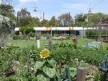 St Kilda / Veg Out Community Gardens, Shakespeare Grove / Central lawn surrounded by garden beds