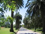 St Kilda / St Kilda Botanical Gardens, Blessington Street / View along path towards Blessington St entrance